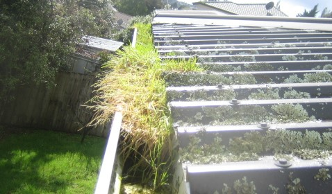 Gutter Cleaning Auckland North Shore With Gutter Geeks